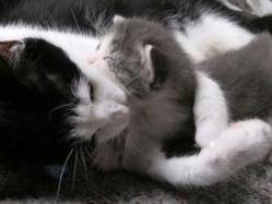 cat08013112108.jpg