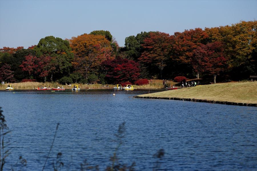 昭和公園0101