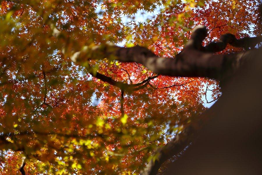 昭和公園0206