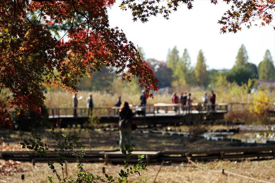 昭和公園0208