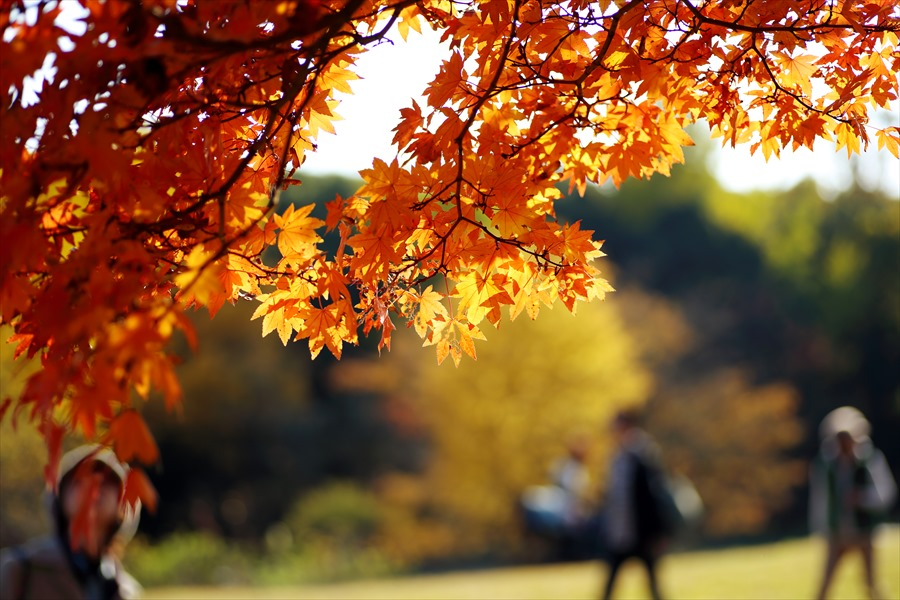 昭和記念公園0501