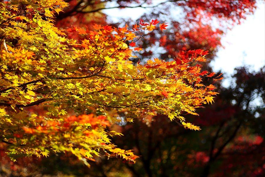 昭和公園0504