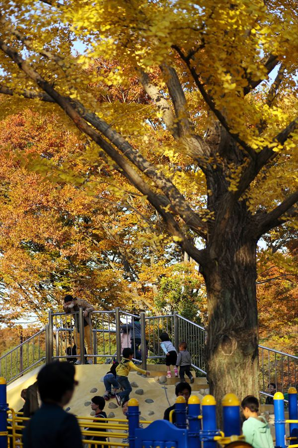昭和公園0601