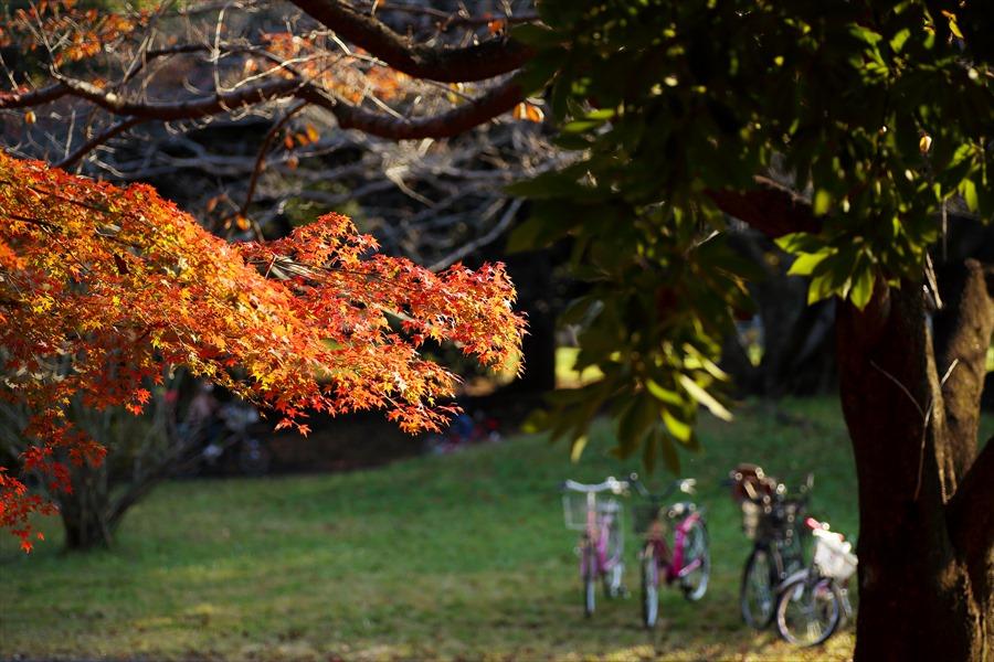 昭和公園606