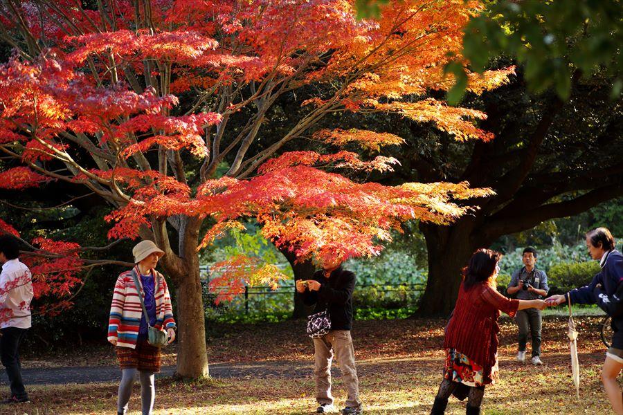 昭和公園0706