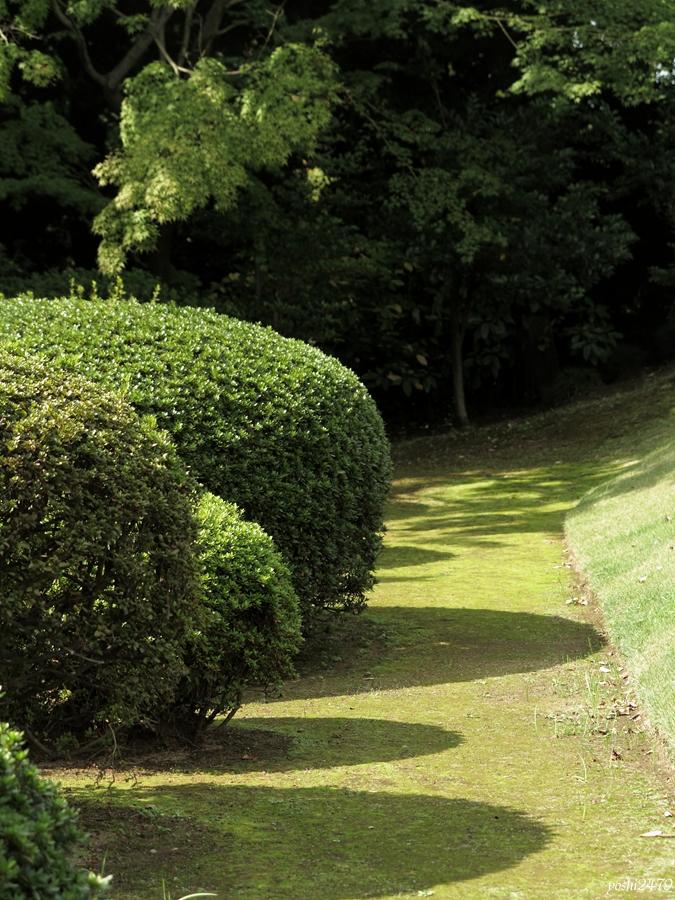 古河庭園バラ0208