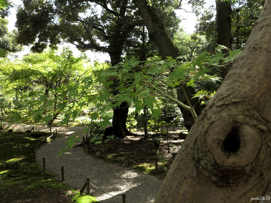 古河庭園0301