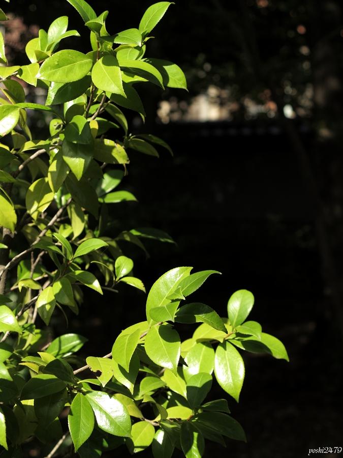 古河庭園0409