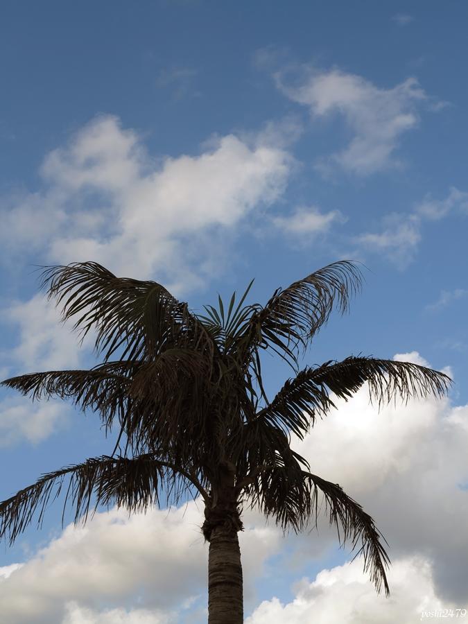 沖縄0302