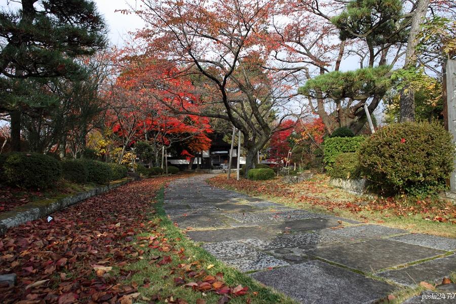 仙台紅葉103