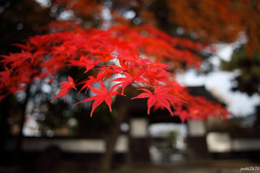 仙台紅葉0105
