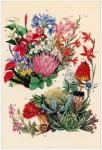 テーブルマウンテン野生植物