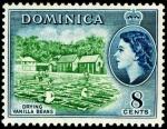 ドミニカ・バニラの乾燥
