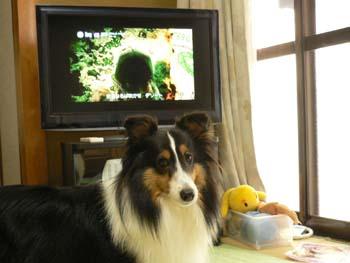2新しいテレビ