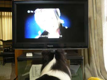 3新しいテレビ