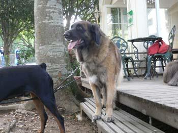 5大型犬が大集合