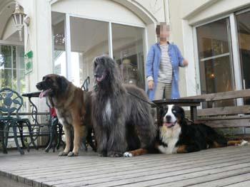 4大型犬が大集合
