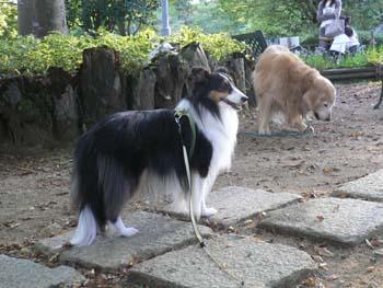 3大型犬が大集合