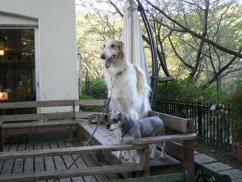 1大型犬が大集合