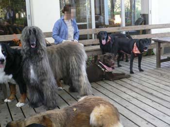 2大型犬が大集合