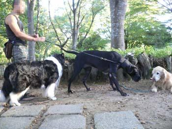 9大型犬が大集合
