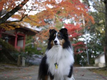 5お寺の紅葉