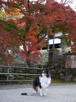 3お寺の紅葉