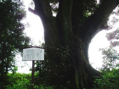 kifune1.jpg
