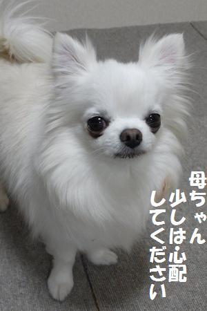 RIMG0001_20110331215925.jpg