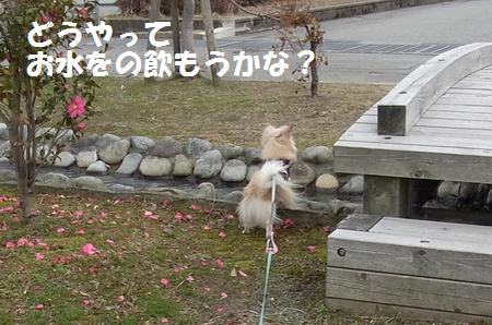 RIMG0074_20110306172350.jpg