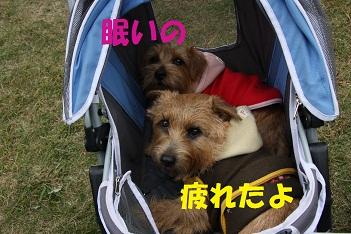 2010_1114_141044-IMG_1294a.jpg