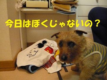 2011_0306_103607-P1050170a.jpg