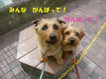 2011_0402_124548-P1050253a.jpg