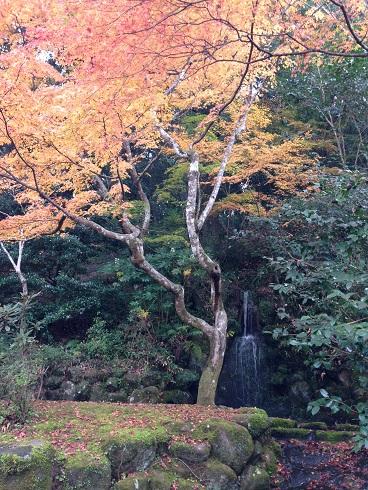 IMG_8344.小滝と紅葉