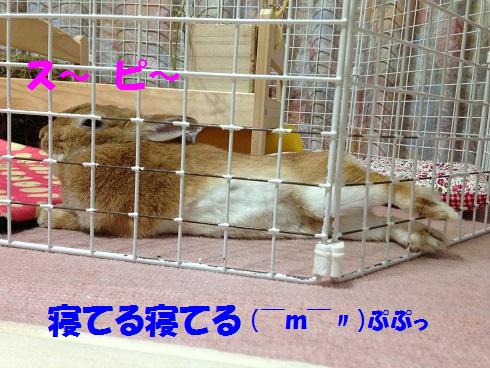 IMG_8518.寝てる