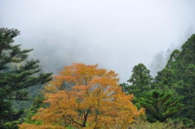 8小田深山14.10.22