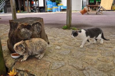 2猫14.11.17