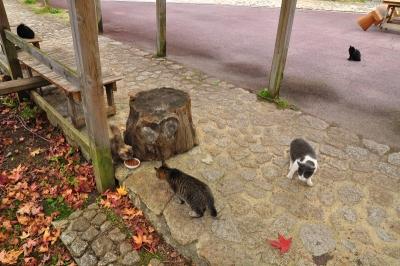 3猫14.11.17