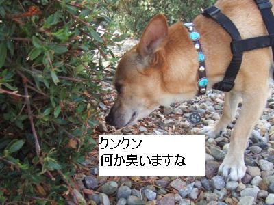 santafe+life+046_convert_20110729134150.jpg