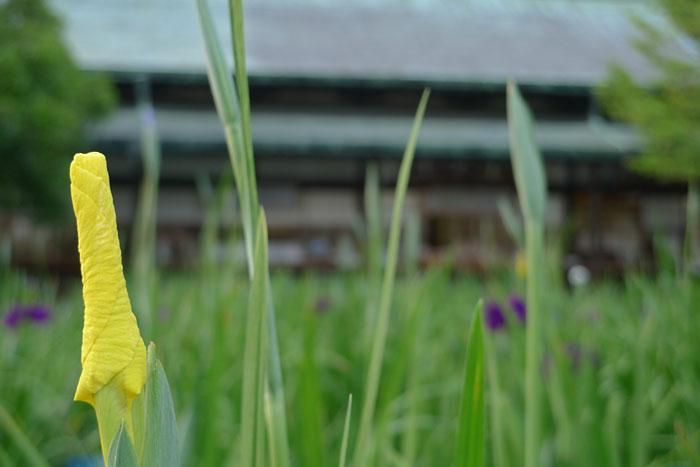 福岡県 宮地嶽神社 21