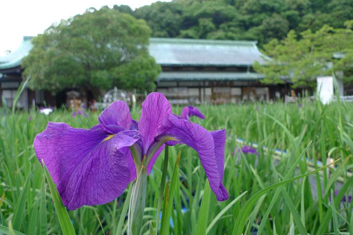 福岡県 宮地嶽神社 19