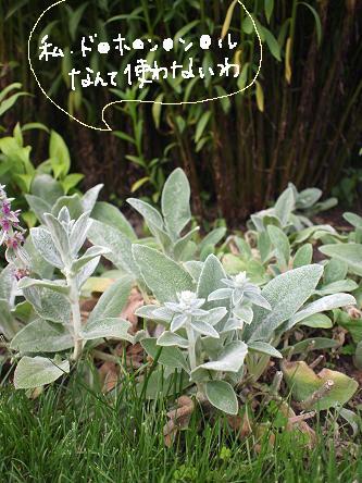 furano garden-10