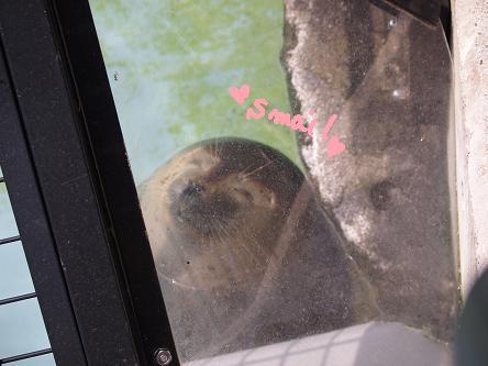 asahiyama zoo 3