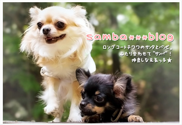 samba***blog