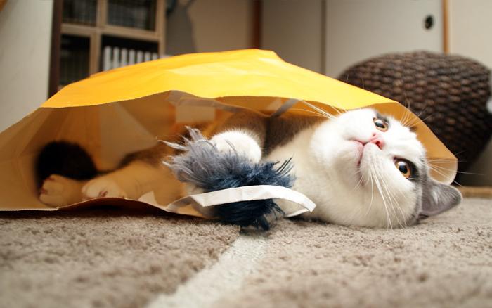 やっぱり紙袋が好き