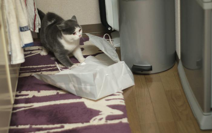紙袋パニック