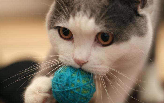 玉と猫の関係