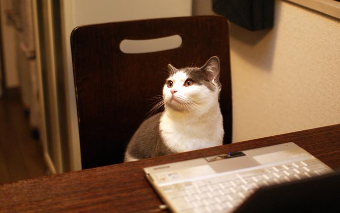 パソコンをたしなむ