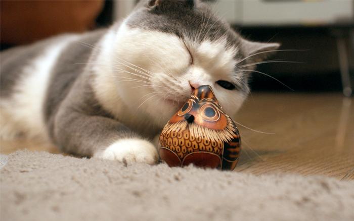 花と鳥と猫