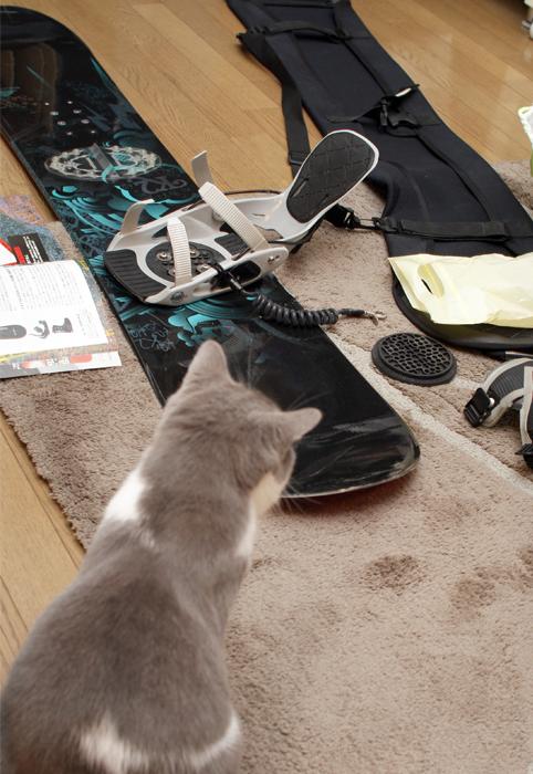 ボードと猫